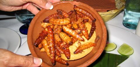 L'entomophagie ou les insectes dans la gastronomie moderne