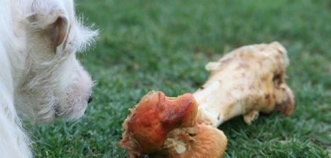 Les aliments de fête dangereux pour les chiens